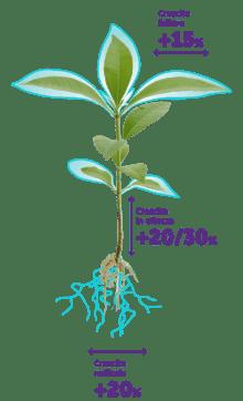 Schema riassuntivo dei vantaggi del Microgranulo Dema: crescita foliare +15%, crescita in altezza tra il +20 e il +30%, crescita radicale +20%